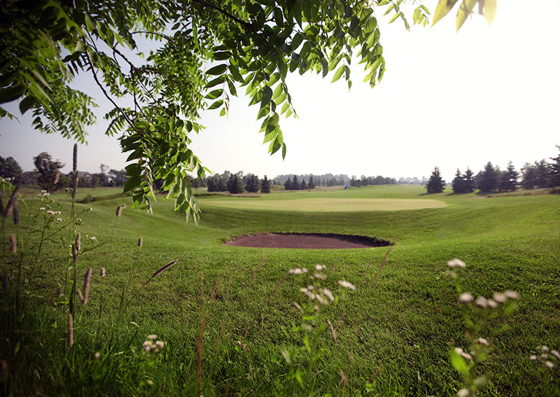 Trees in the forefront and a golf green in behind