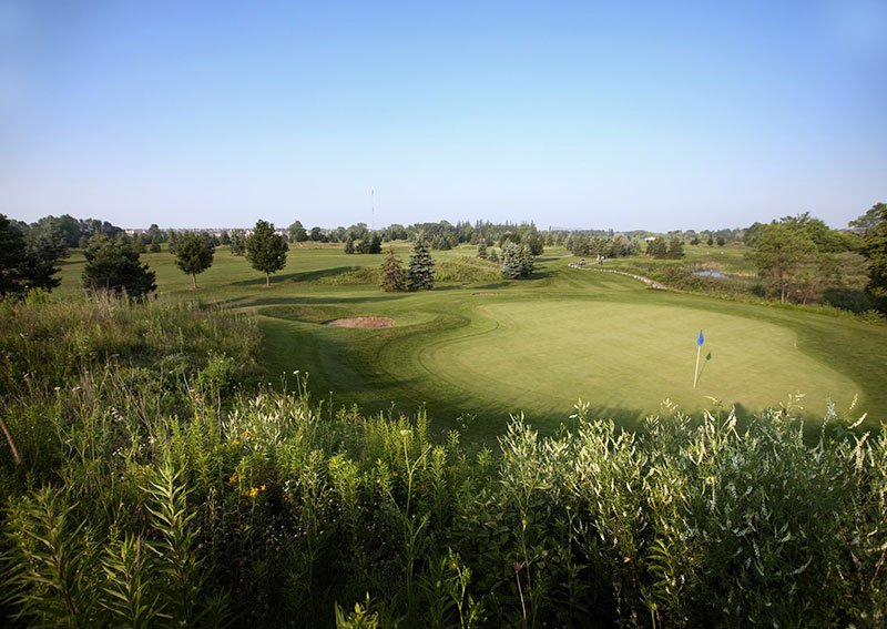 Native plants next to a sustainably managed golf green