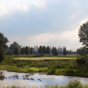 A wetland with geese next to a sustainably managed golf course